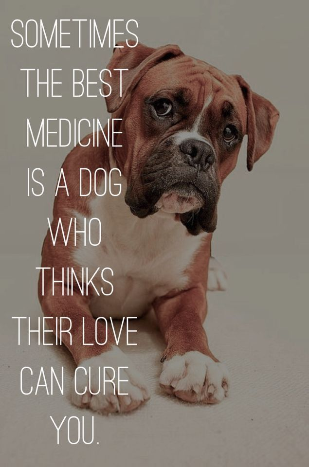 A long time ago, I had a very bad freak accident. I lost everything, career, home, most all friends, family members who couldnt handle my medical diagnosis and resulting depression. What got me through the toughest times were my wife and my 14yr old Best Friend my Boxer. This pic and its message are so very true! Theres a nearby Pinned pic that mentions If you havent felt the love of a Boxer theres a part of your soul unawakened. These two Pins go hand in hand. They show you the true heart…