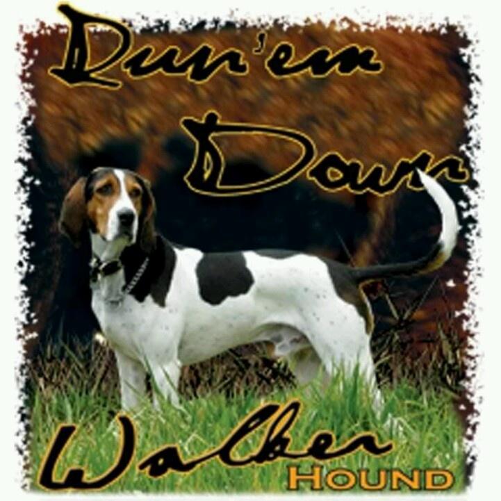 Run 'em down Walker Hound!!