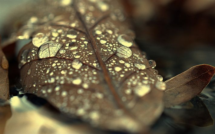 Download wallpapers dry leaf, drops of water, dew, autumn