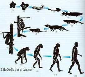 Reflexiones Cristianas Cortas - Evolución o Creación?