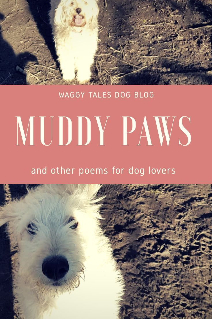 Poems about dogs and for dog lovers  | Waggy Tales Dog Blog