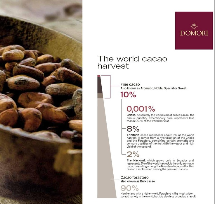 the world cacao harvest