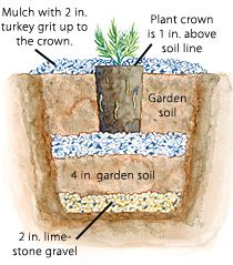 Growing Lavender in colder climates