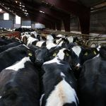 "Report in The Guardian Claims that ""Mass Meat Production Can't be Justified"""
