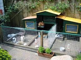 Image result for contoh kandang kelinci yg baik