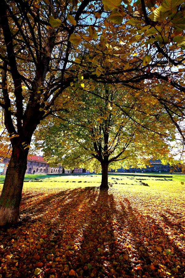 Autumn coming in Oslo.