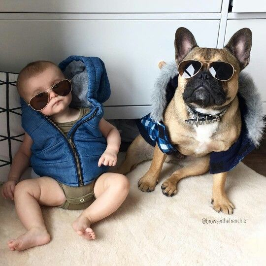 French Bulldog and Baby, Friday chillin'  @browserthefrenchie