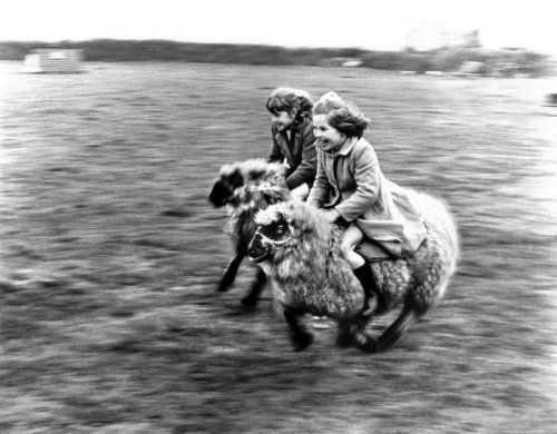 Girls riding on sheep by John Drysdale: