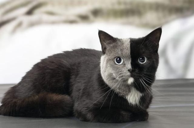 This Kitten Was Born With Two Faces But Grew Up To Be The Most