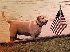 Independence Day (United States) - Wikipedia