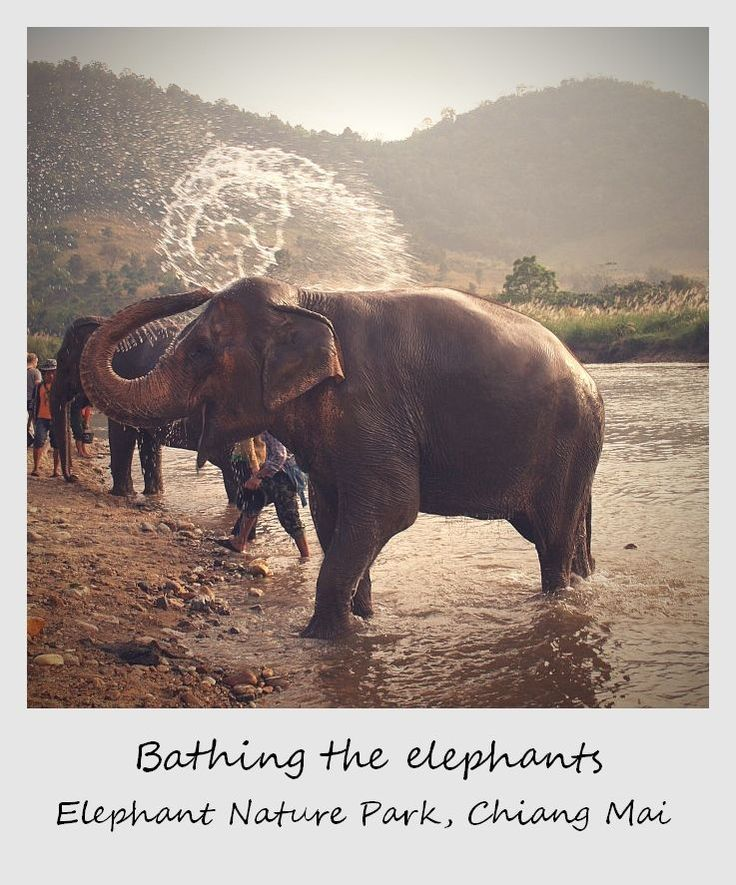 Work at the chiang mai elephant sanctuary in Thailand