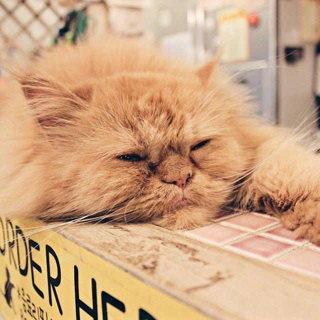 Lazy Monday in a Cat Cafe #cat #cats #cutecat #cutecats #Korea #korean #SouthKorea #southkorean #koreanfood #koreanstyle #koreastyle #koreatrip #koreanwave #Seoul #seoul_korea #seoulkorea #koreajunkies #asia #travel #trip #awesome #ig_korea #한국 #한국인 #여행