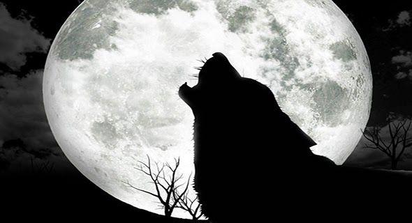 Serigala Pun Mengakui Kenabian Muhammad Saw Tidak hanya manusia dan jin saja yang mengakui kenabian Rasulullah Muhammad. Begitu juga hewan yang dianggap buas dan ditakuti. Yaitu Serigala yang buas serta menakutkan ternyata mengimani Rasulullah dan mengakui akan kenabiannya. Di antara para Nabi dan Rasul Nabi Muhammad Saw merupakan satu-satunya utusan Allah yang dikaruniai banyak mukjizat. Salah satunya seperti yang diriwayatkan dari Abu Sa'id Al-Khudri. Ia bercerita bahwa ada seekor serigala…