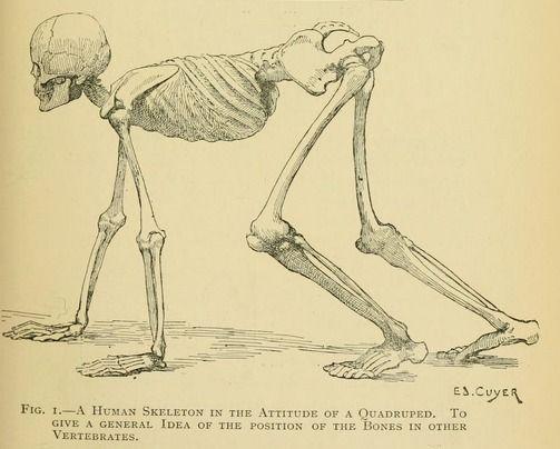 19 best skeleton illustrations images on pinterest | drawings, Skeleton