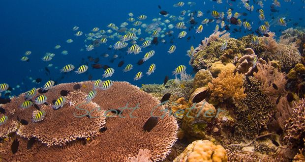 Não importa se você é iniciante ou experiente, esses lugares são perfeitos para mergulhar