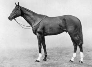 Rustom Pasha(1927)(Colt)Son In Law- Cos By Flying Orb. 5x5 To Cremorne, Blair Athol, Lord Clifden & Galopin. Won Chesham S(Eng), Eclipse S(Eng), Champion S, 2nd St James's Palace S(Eng), Rous Memorial S(Eng), 3rd St Leger (Eng). Very Influential Sire In Argentina.