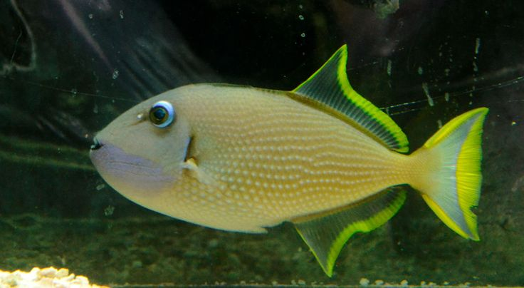 Saltwater Fish For Sale