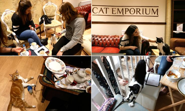 New pictures show life inside London's first ever cat cafe #DailyMail
