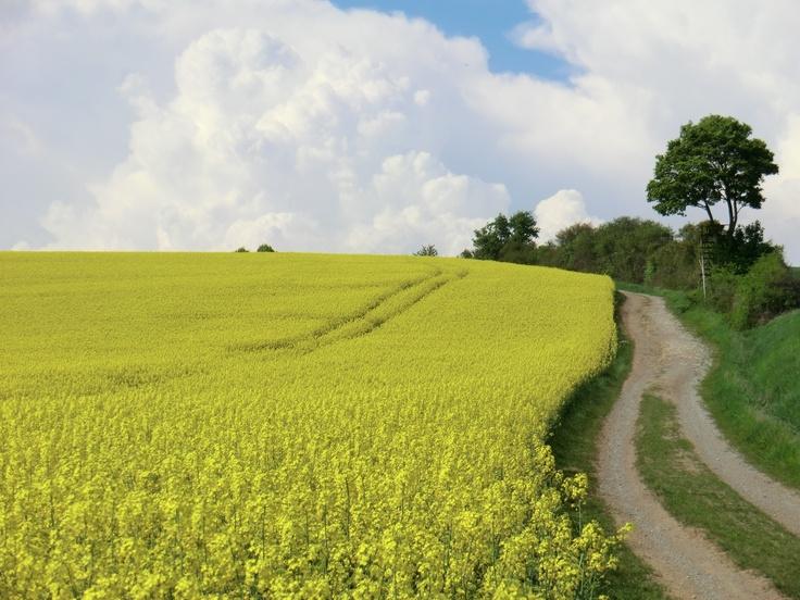 http://agrarbetrieb.com/blog/ #Rapsfeld mit Weg. Du kannst das Ende des Weges nicht erkennen doch er wird dich zum #Ziel führen.