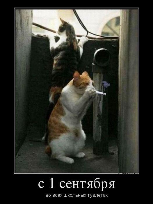 Смешные картинки к 1 сентября с животными до слез