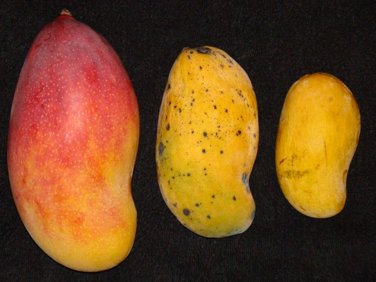 Mangoes, Another of the Top Redfoot Tortoise Foods