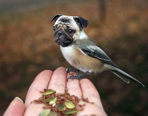 Hybrides oiseaux a tete de chien 11 hybrides oiseaux t te de chien t te pho - Croisement chien insolite ...