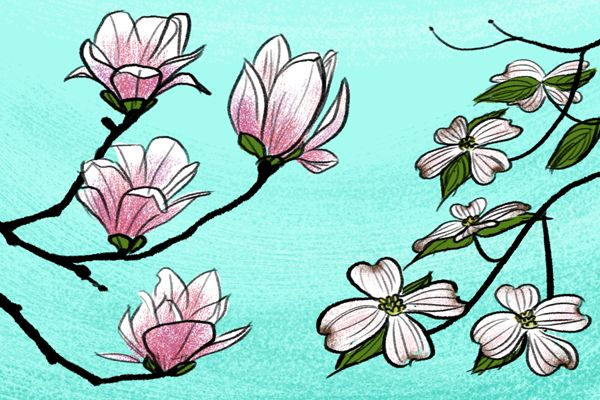Spring Drawings: How to Draw Simple Flowers | Art | Spring ...