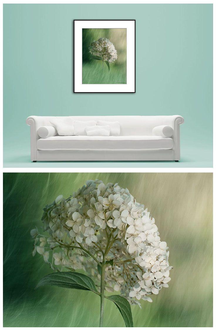 Hydrangea Photo Print Flower Photography Print Floral