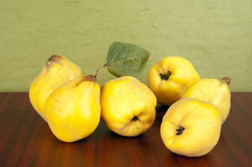 Growing and cooking quinces Page 1