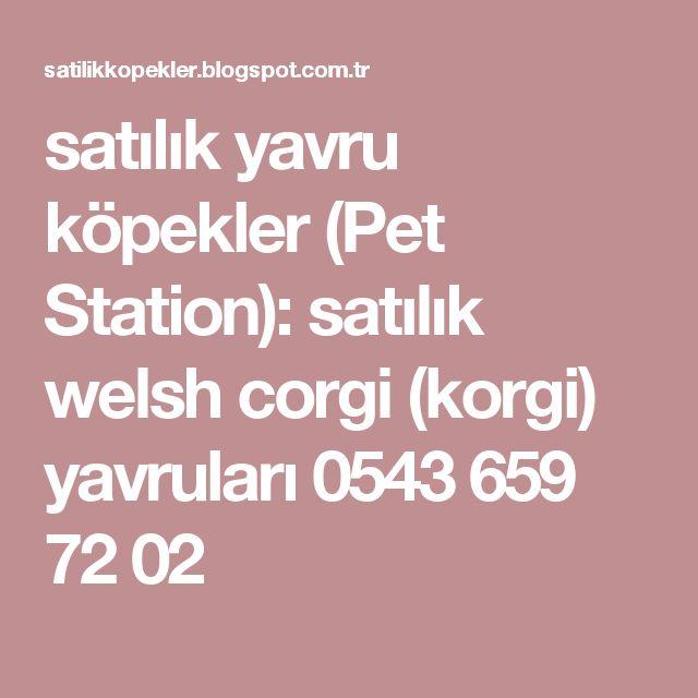 satılık yavru köpekler (Pet Station): satılık welsh corgi (korgi) yavruları 0543 659 72 02