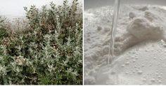 ¡Utiliza bicarbonato de sodio en el jardín y ahorra como nunca!