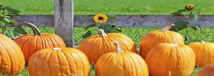 The Circleville Pumpkin Show: 2014 Edition | Inn & Spa at Cedar Falls | Hocking Hills, OH