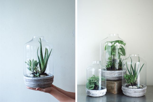 DIY this terrarium using an unfinished ceramic base and a simple glass top.
