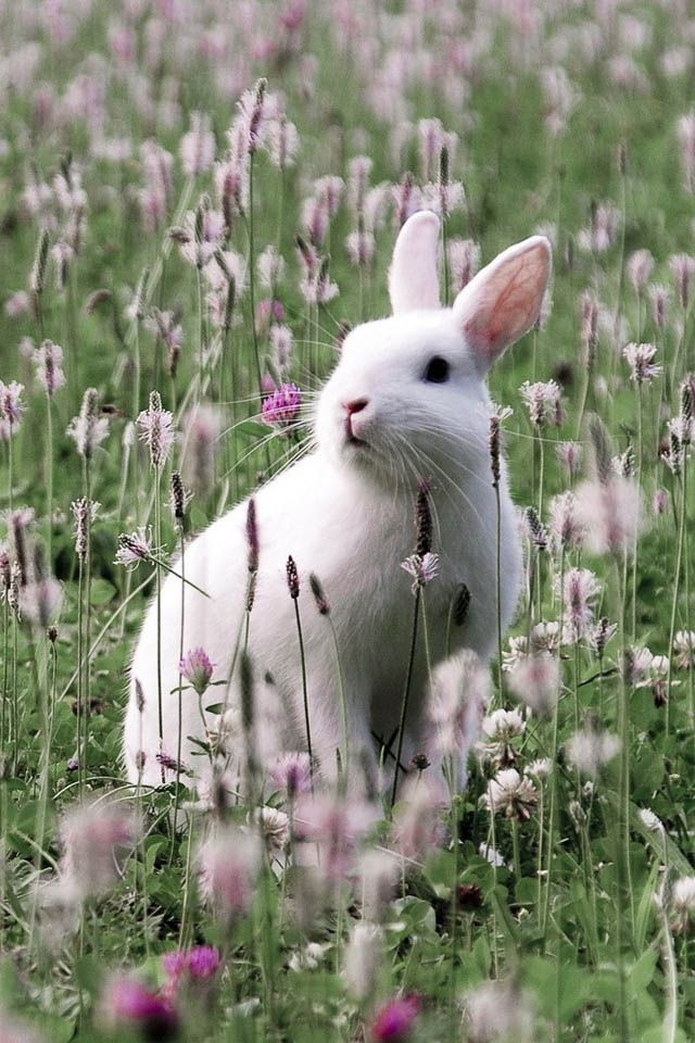 And the best thing is This White Rabbit is wild and free!