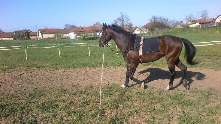 horse#workhard