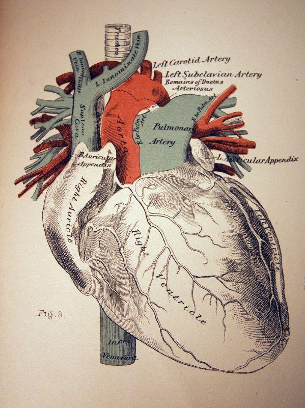 *map heart