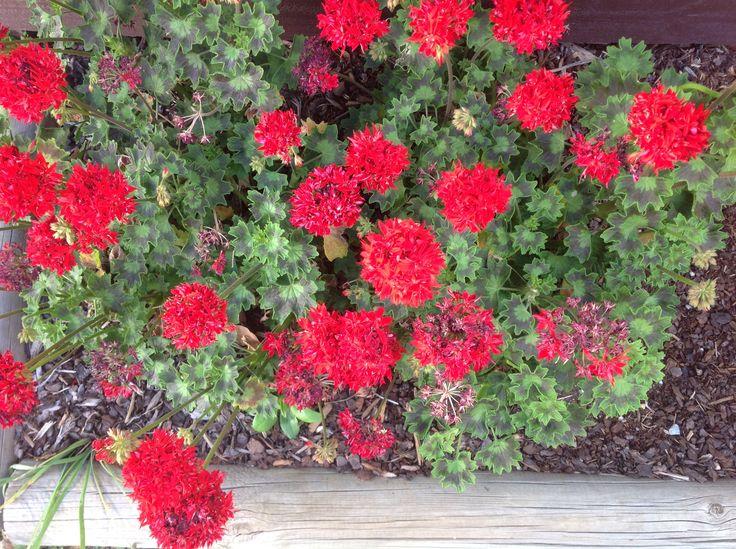 Late Spring, colour in the garden
