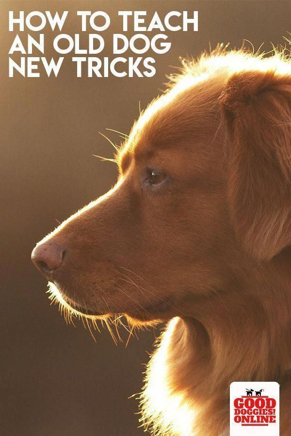 10 Home Dog Grooming Tips You Should Know Diy Dog Shampoo Flea