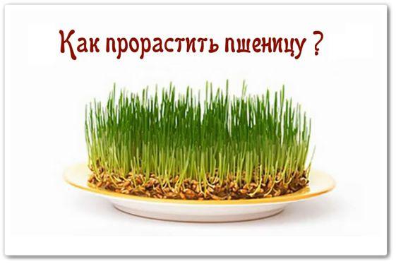 Пророщенная пшеница - как приготовить