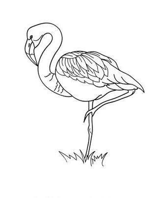 ausmalbilder flamingo kostenlos malvorlagen windowcolor zum drucken | ausmalbilder, malvorlagen
