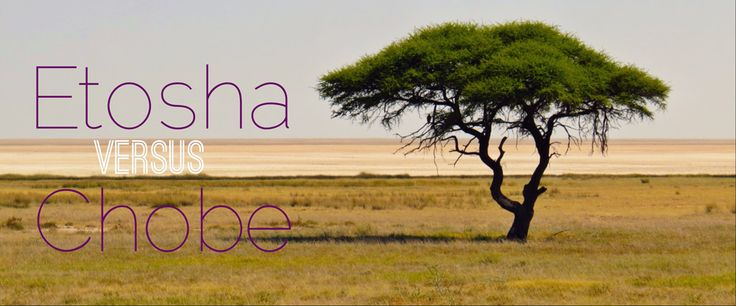 Should you go on Safari at Etosha National Park in Namibia or Chobe National Park in Botswana? Find out the difference!