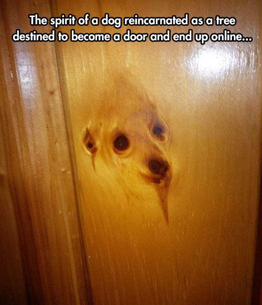 It's A Doggy Door