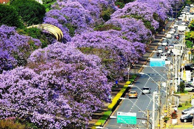 15 árvores adequadas para plantio em vias urbanas e dicas de como plantá-las corretamente ~ Eco Vida - Bom Despacho