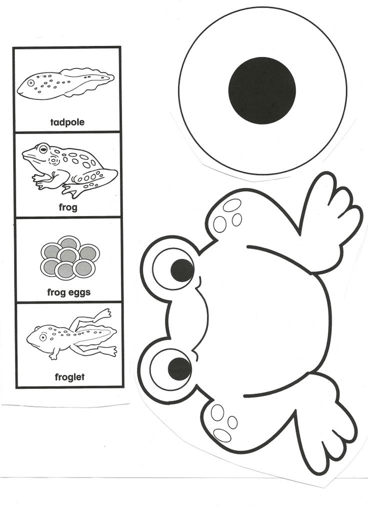 Frog Life Cycle.pdf - Google Drive could use with Miss T's frog life cycle mini book.