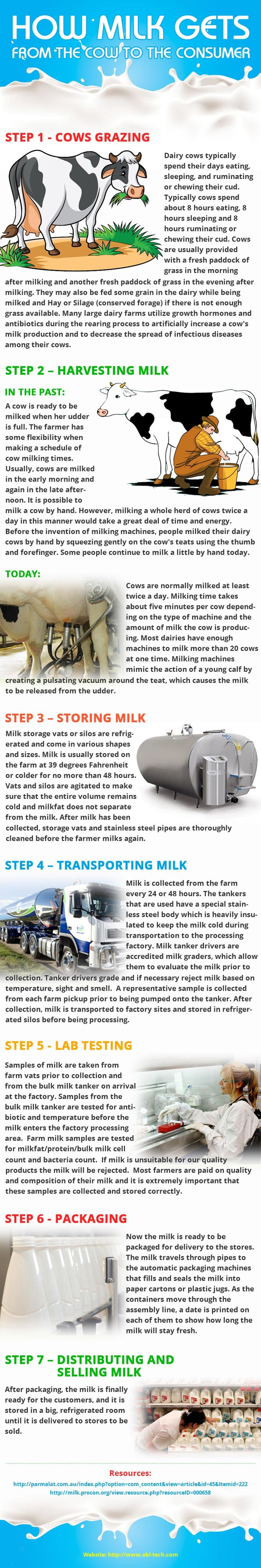 How milk gets from the cow to the consumer