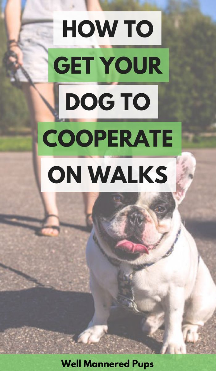 How To Get Your Dog To Cooperate On Walks Dog Training Training