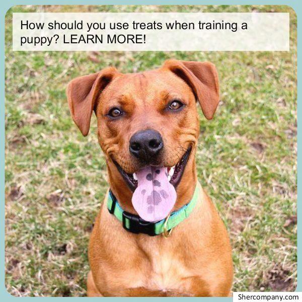 Dog Toilets For Dog Potty Training You Don't Want To Miss. dog-training-pott…