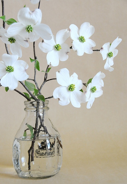 dogwood in milk bottle