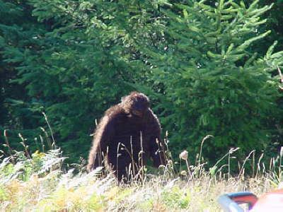 Bigfoot Found! Bigfoot photos and sightings at Mt. St. Helens near Ape Caves