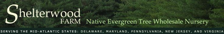 Wholesale Native Evergreen Trees, a nursery for Pine, Fir, and Spruce in Delaware. Shelterwood Farm serves the Mid-Atlantic States: including Maryland